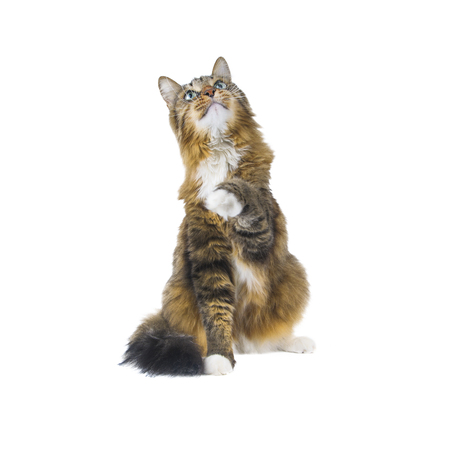 Big cat sitting on white background Reklamní fotografie