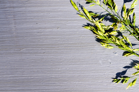 Gray background with a blade of grass