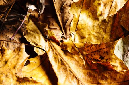 Autumn leaves on a dark background