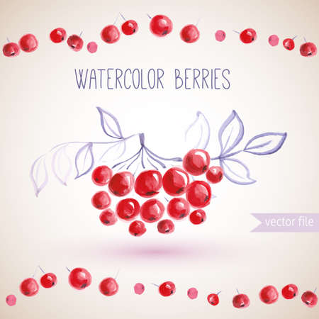 background with watercolor  branches rowan berry