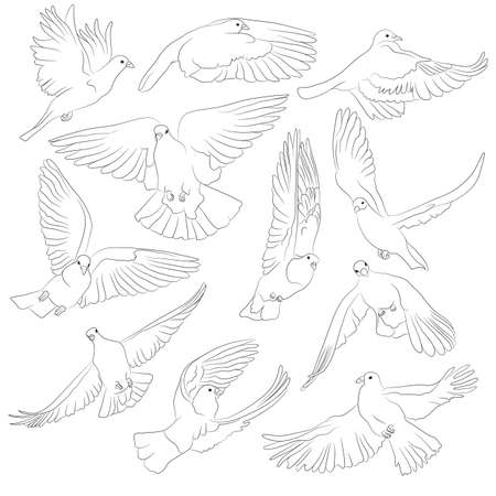 Set of isolated flying birds. Vector illustration