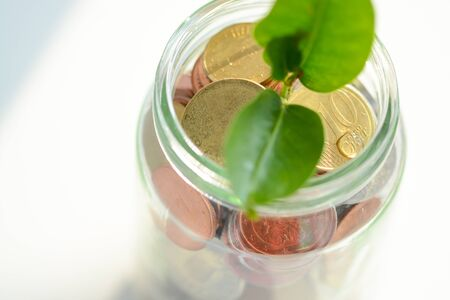 growing inside: Green plant with leaves growing inside a jar full of money coins