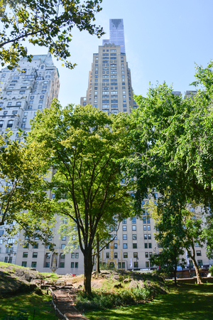 High rising buildings around Central Park summer
