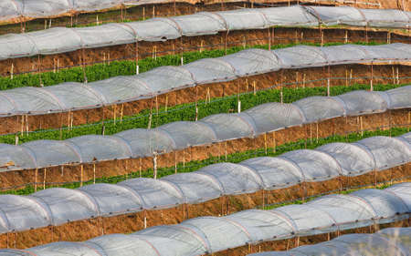 Greenhouse Plant, Royal Project , Doi Inthanon, Chiang Mai, Thailand photo