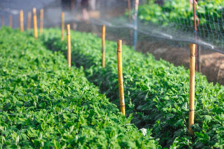 watered: Organic plat being watered in a green house Stock Photo