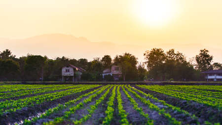 Cultivated land in a rural landscape at sunset photo