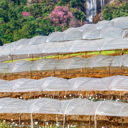 Cascade greenhouse plant with waterfall background, Royal Project , Doi Inthanon, Chiang Mai, Thailand photo