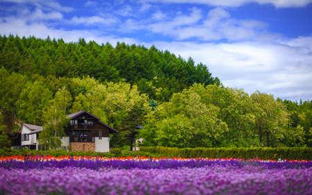 carlsbad: Flower field under cloud sky, Furano, Hokkaido, Japan Stock Photo