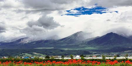 Tulip field under cloud sky with mountain background, Furano, Hokkaido, Japan Reklamní fotografie