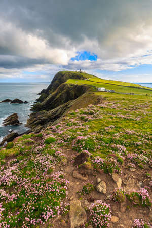 Sea pink on cliff under blue sky, Shetland, Scotland, United Kingdom Foto de archivo