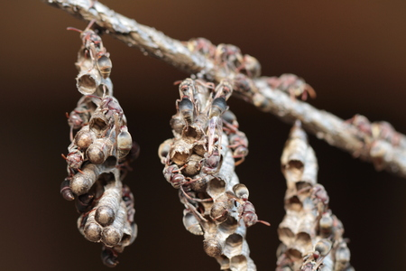 paper wasp: paper wasp nest on string Stock Photo