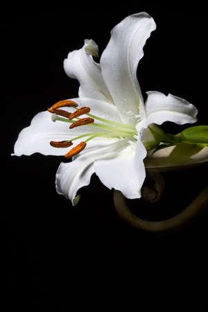 enkele lilium witte bloem op zwarte achtergrond. verticale samenstelling