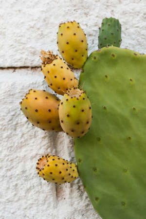 Opuntia, prickly pear, barbary fig, cactus pear, detail of fruits