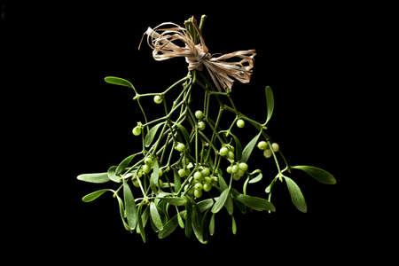 Mistletoe bunch  Standard-Bild