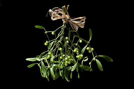 Mistletoe bunch  Stock Photo