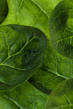 Fresh raw spinachs background in vertical composition
