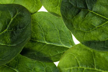 Raw spinachs Hintergrund Standard-Bild - 30681088