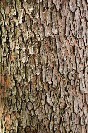 Detail of redish strawberry tree trunk