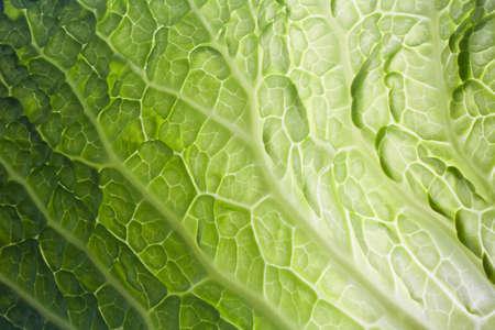 single vegetable leaf close up