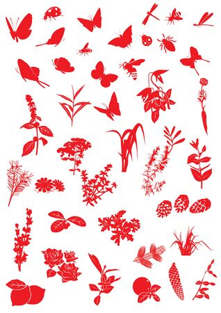 Insects and plants
