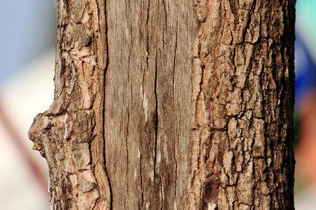 burl wood: Bark of wood  Tree  Stem
