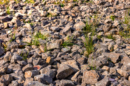 Stones with grass tufts. Stony shore in the sun. Stony desert. Rock background. Near the quarry.