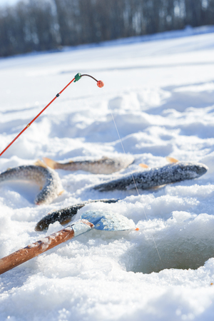 Fish and rod on the Ice close to hole while winter fishing