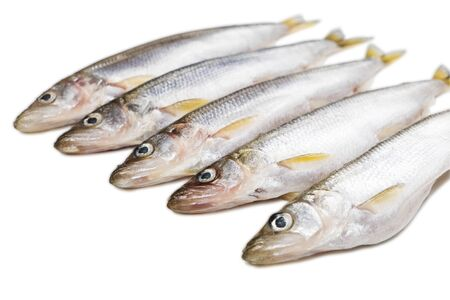 six pieces of isolated smelt fish on white background