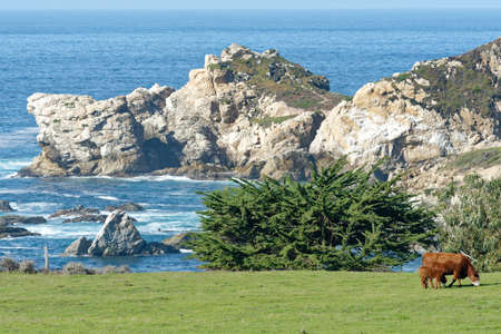big sur: California big sur coastline