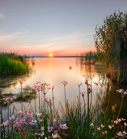Backwater on the Chudskoy lake. lake Peipsi