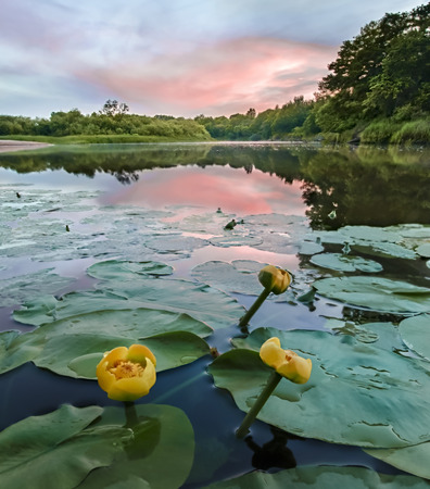 dreamscape: Lilies on the river sunset