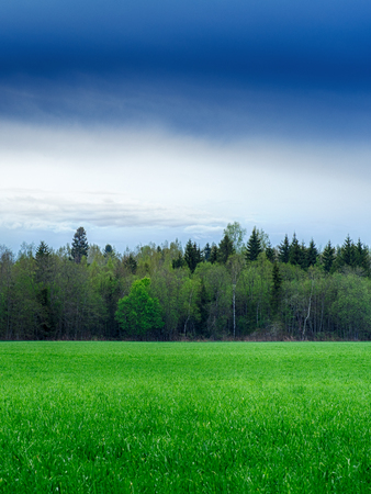 vacant land: A field strewn with grass and forest. Summer landscape. Stock Photo