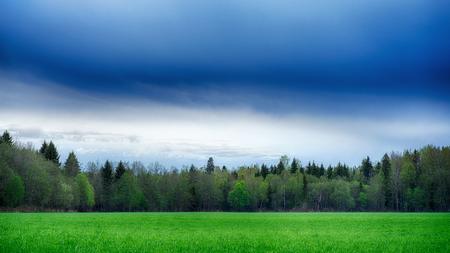 草と森と散らばっているフィールドです。夏の風景。 写真素材 - 79199052