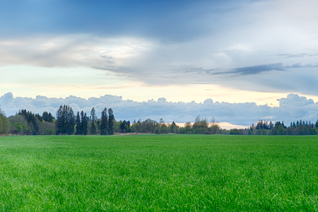 A field strewn with grass and forest. Summer landscape. Stock Photo