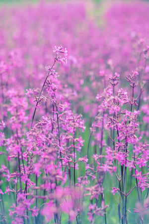 Spring background with beautiful pink flowers. Closeup
