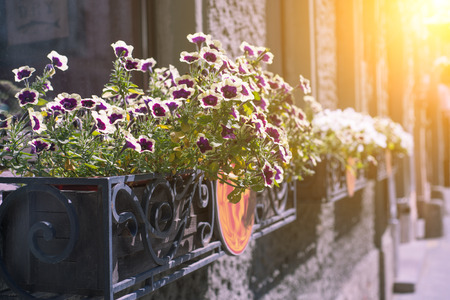 light chains: flower pot with white flowers hang on the street Stock Photo