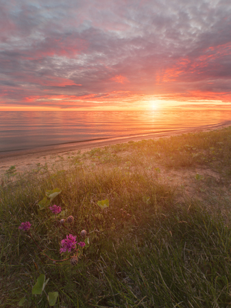 backwater: Sunset on the Peipsi lake with pink flowers, on the border of Russia and Estonia
