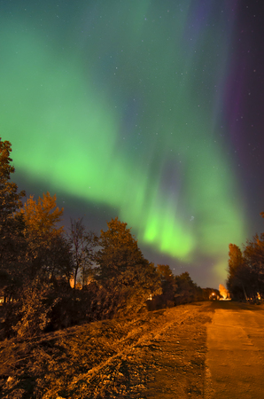 Northern lights aurora borealis above a forest Stock Photo