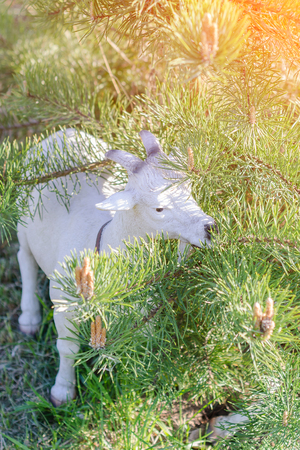 One of the variants of decor garden statue goat