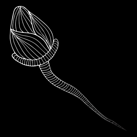 Sperm icon under a microscope. Abstract hand drawn sperm isolated on black background. Vector illustration. Line art. Sketch. Illustration