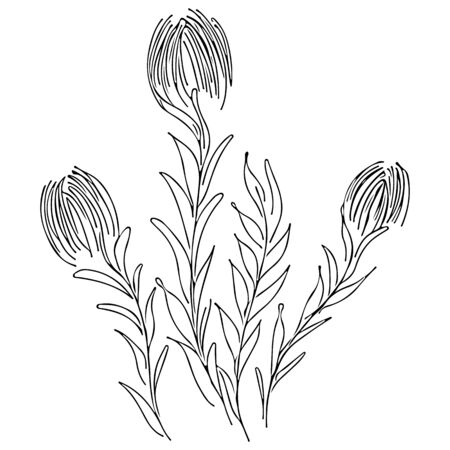 Abstract wildflowers outline icon isolated on white background. Hand Drawn vector illustration. Outline flowers.