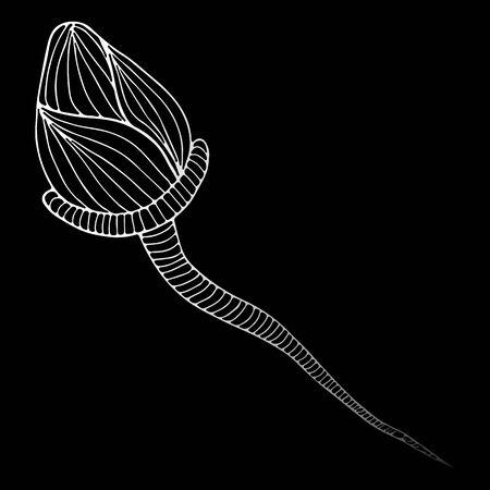 Sperm icon under a microscope. Abstract hand drawn sperm isolated on black background.  illustration. Line art. Sketch. Zdjęcie Seryjne