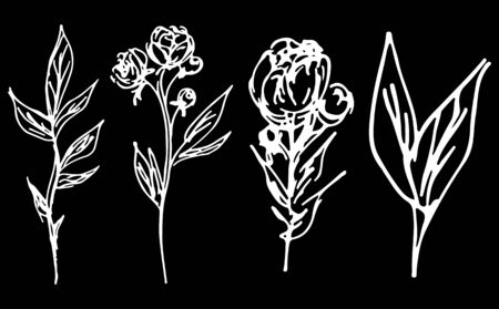 Abstract peonies and roses isolated on black background. Hand drawn floral collection. 4 floral graphic elements. Big  set. Outline icons. Line art. Reklamní fotografie - 124796100