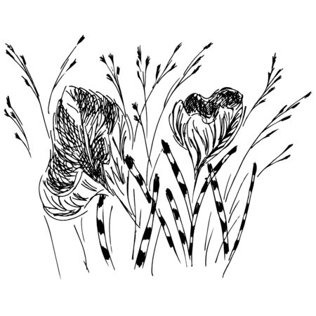 Linear icon with black wildflowers outline hand on white background. Cute hand drawn illustration. Flower pattern. White background isolated.