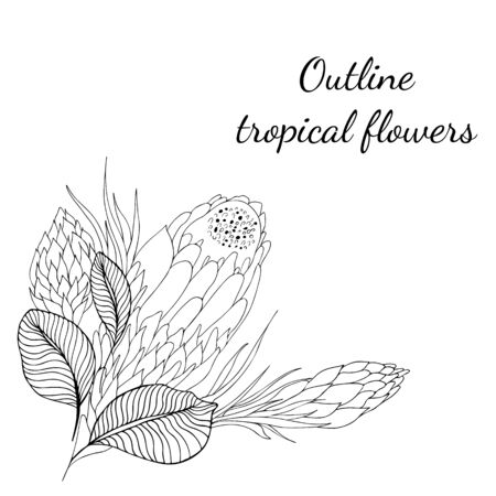 Outline hand drawn tropical flowers. Retro flowers hand outline orchid, great design for any purposes. Vector illustration. Tropical plant. Design elements. Abstract art background.