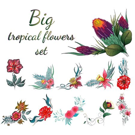 Big set of colorful tropical flowers. Big floral botanical flower set isolated on white background. Hand drawn vector collection. Botanical Hawaii nature. Tropical palm icon. Hawaiian illustration.