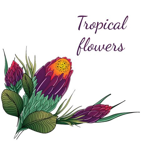 Flat hand drawn tropical flowers isolated on white background. Vector illustration. Exotic tropical plant. Design elements. Abstract art background. Illustration