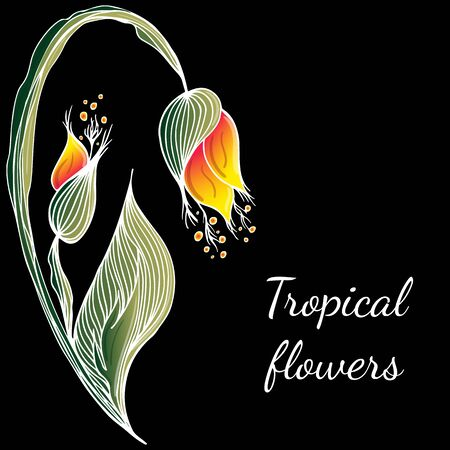 Flat hand drawn tropical flowers isolated on black background. Vector illustration. Exotic tropical plant. Design elements. Abstract art background.