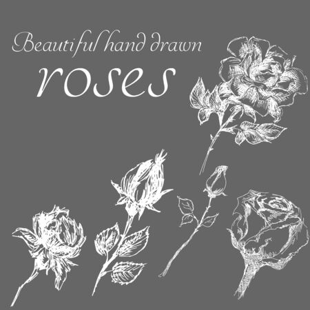 Set of isolated hand drawn roses. Cute flower illustration in freehand style. Rose vector set by hand drawing. Engraved flowers sketch vintage collection in line art style.