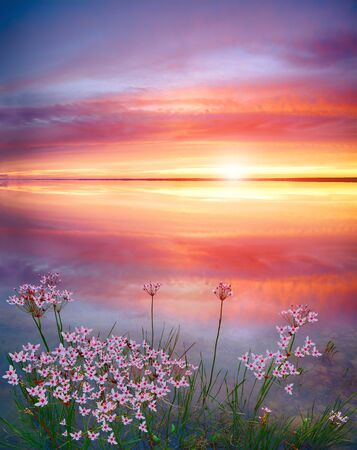 Stunning sunset on the lake with white wildflowers. Beautiful sunset over the river. Sunrise at lake. Inspirational calm sea with sunrise sky. Meditation ocean and sky background.
